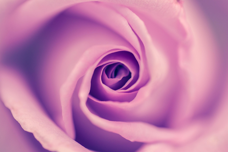 お花にまつわる素敵な話